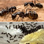 Oregon Insect and Rodent Control offers all kinds of pest control services including ant extermination