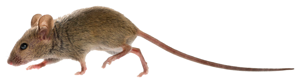 Oregon Insect and Rodent Control offers all kinds of pest control services including mouse extermination